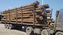 河北浅谈建筑木方有哪些常用的用途